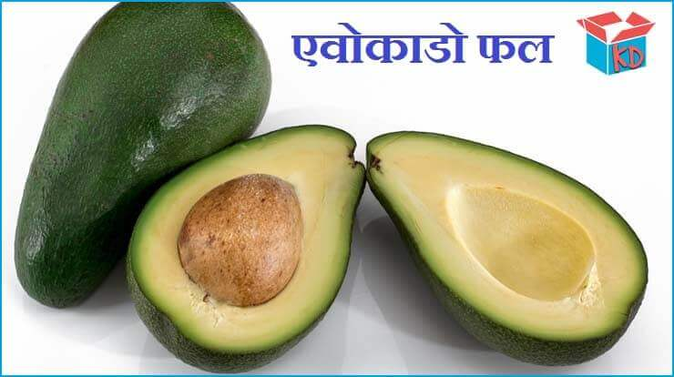 Avocado Fruit In Hindi