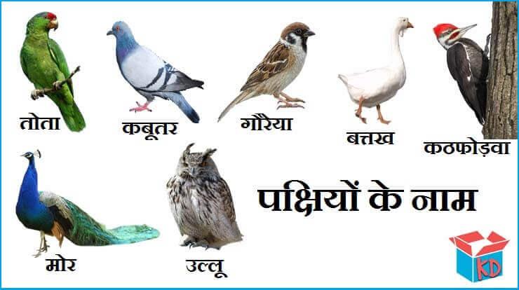 सुंदर और रोचक पक्षियों के नाम Birds