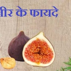Fig Fruit In Hindi