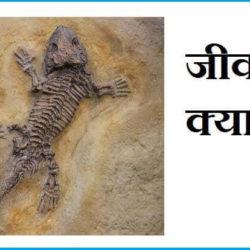 Fossil In Hindi