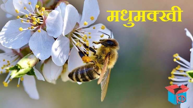 Honey Bee In Hindi
