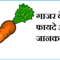 Information About Carrot In Hindi