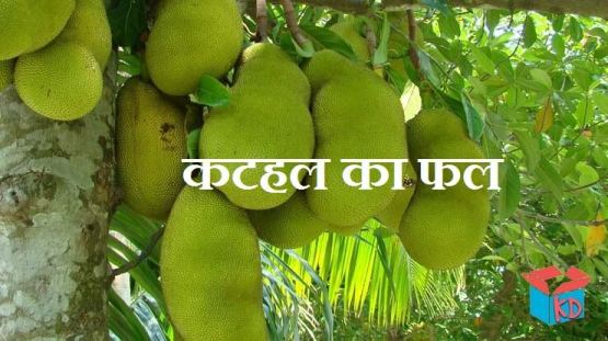 Jack Fruit In Hindi