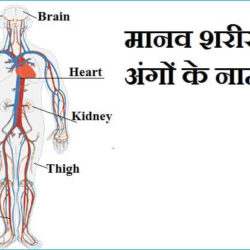 Name Of Body Parts In Hindi