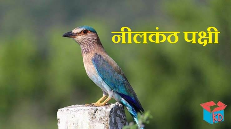 Neelkanth Bird In Hindi