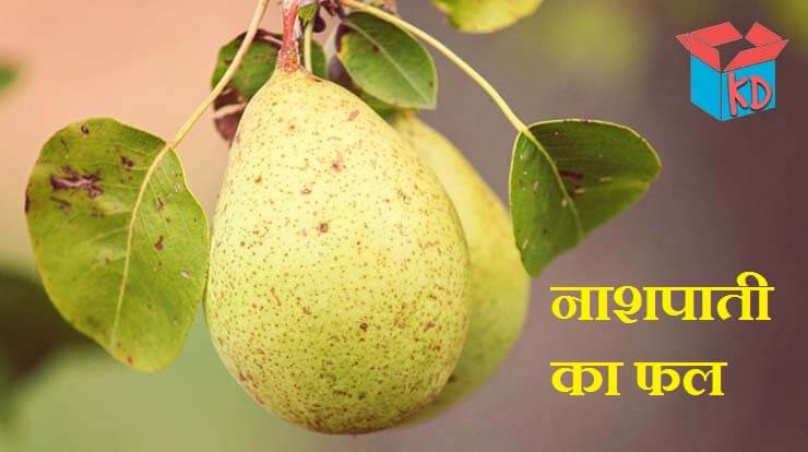 Pear Fruit In Hindi