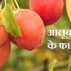 Plum Fruit In Hindi