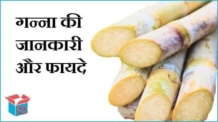 Sugarcane In Hindi