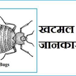 Bed Bugs In Hindi