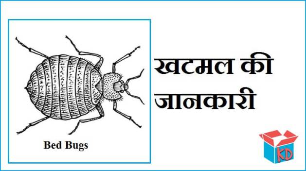 Bed Bugs In Hindi