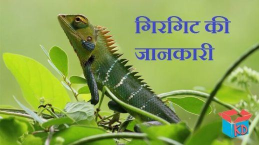 Chameleon In Hindi