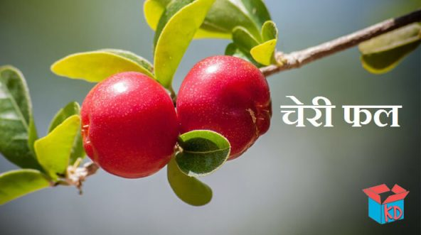 Cherry Fruit In Hindi