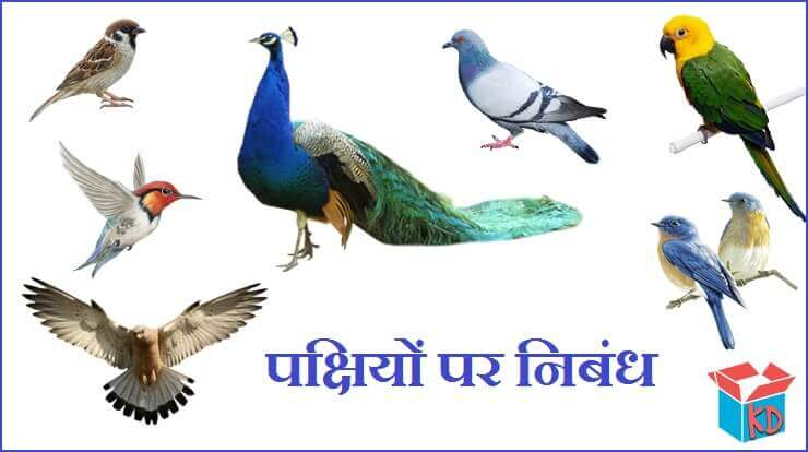 Essay On Birds In Hindi
