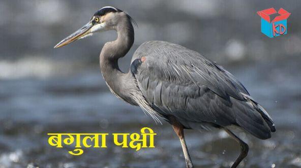 Heron Bird In Hindi