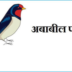 Swallow Bird Information In Hindi