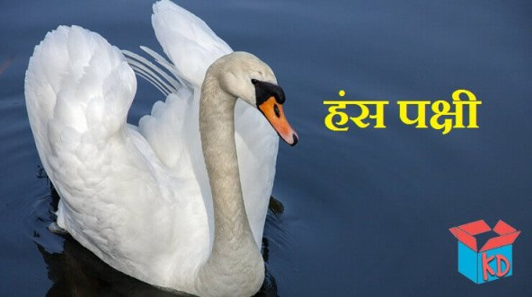 Swan Information In Hindi