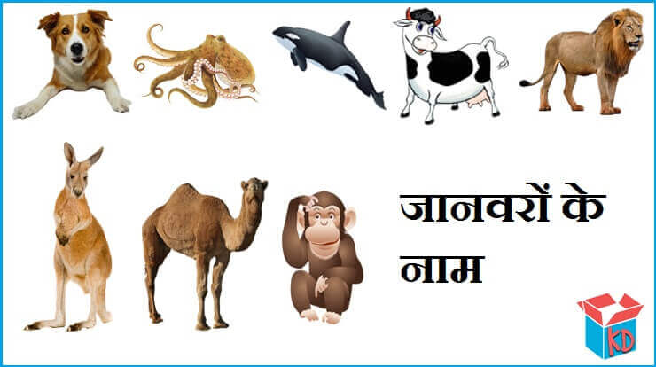Animals Name In Hindi