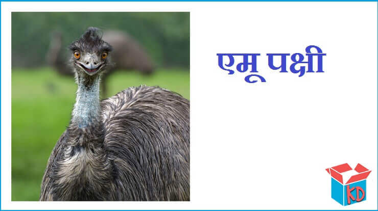 Emu Bird In Hindi