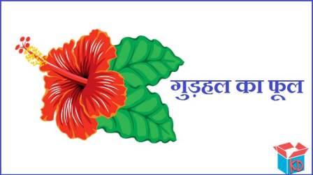 Hibiscus Flower Information In Hindi
