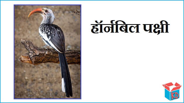 Hornbill Bird In Hindi