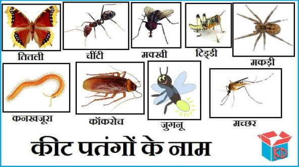 Insects Name In Hindi
