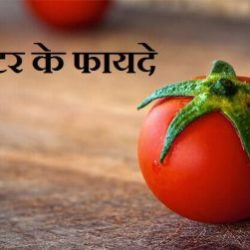 Tomato Information In Hindi