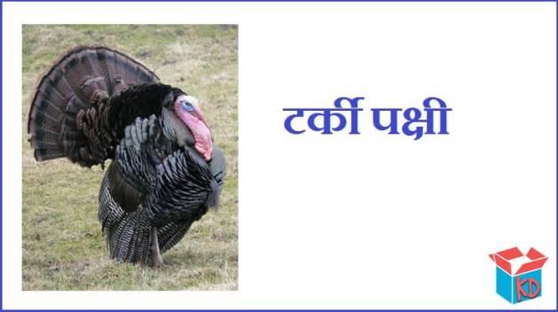 Turkey Bird In Hindi
