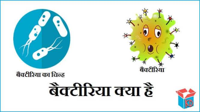 What Is Bacteria In Hindi