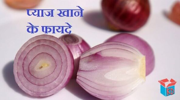 About Onion In Hindi