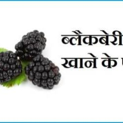 Blackberry Fruit In Hindi