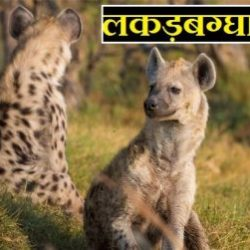 Hyena In Hindi