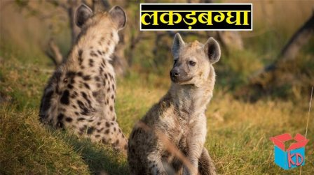 Hyena In Hindi