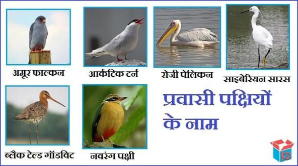 Name Of Migratory Birds In Hindi