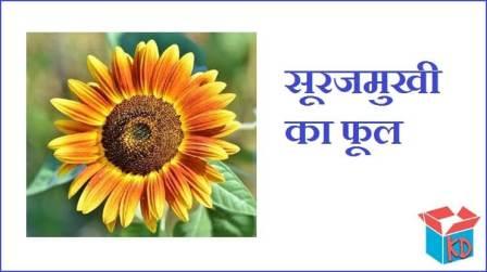 Sunflower In Hindi
