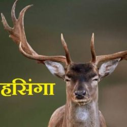 Swamp Deer In Hindi