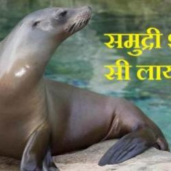 Sea Lion Information In Hindi