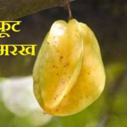 Star Fruit In Hindi