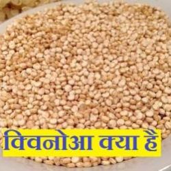 What Is Quinoa In Hindi
