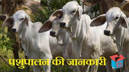 Animal Husbandry In Hindi