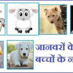 Animals Baby Name In Hindi