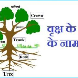 Parts Of Tree In Hindi