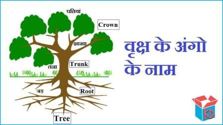 Parts Of Tree In Hindi
