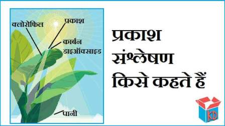 Photosynthesis In Hindi