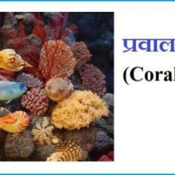 What Is Coral In Hindi