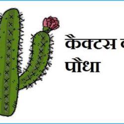 Cactus Plant In Hindi