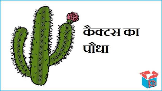 Cactus Plant In Hindi