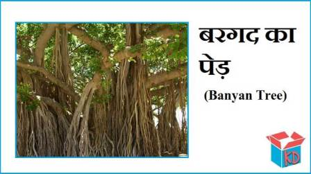 Information About Banyan Tree In Hindi