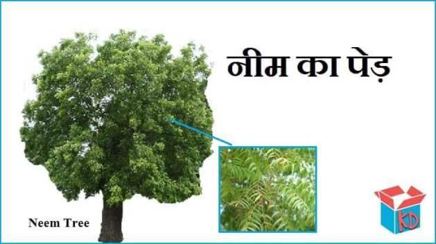 Neem Tree In Hindi