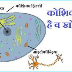 What Is Cell In Hindi