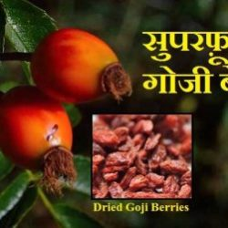 Goji Berries In Hindi